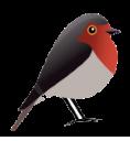 Robin GmbH Webdesign und Online Marketing